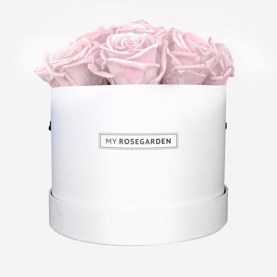 Weiße Rosenbox mit 16 Rosa Infinity Rosen - My Rosegarden