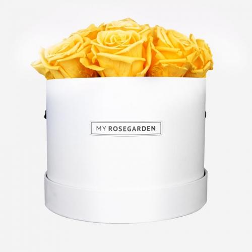 16 gelbe Infinity Rosen in weißer Rosenbox
