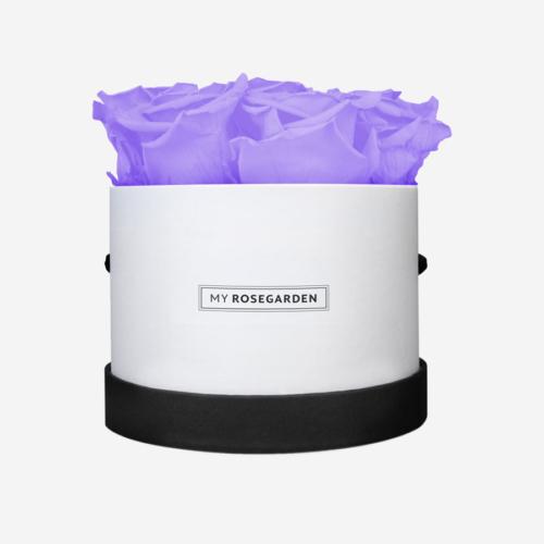 8 lila Infinity Rosen in weiß-schwarzer Rosenbox
