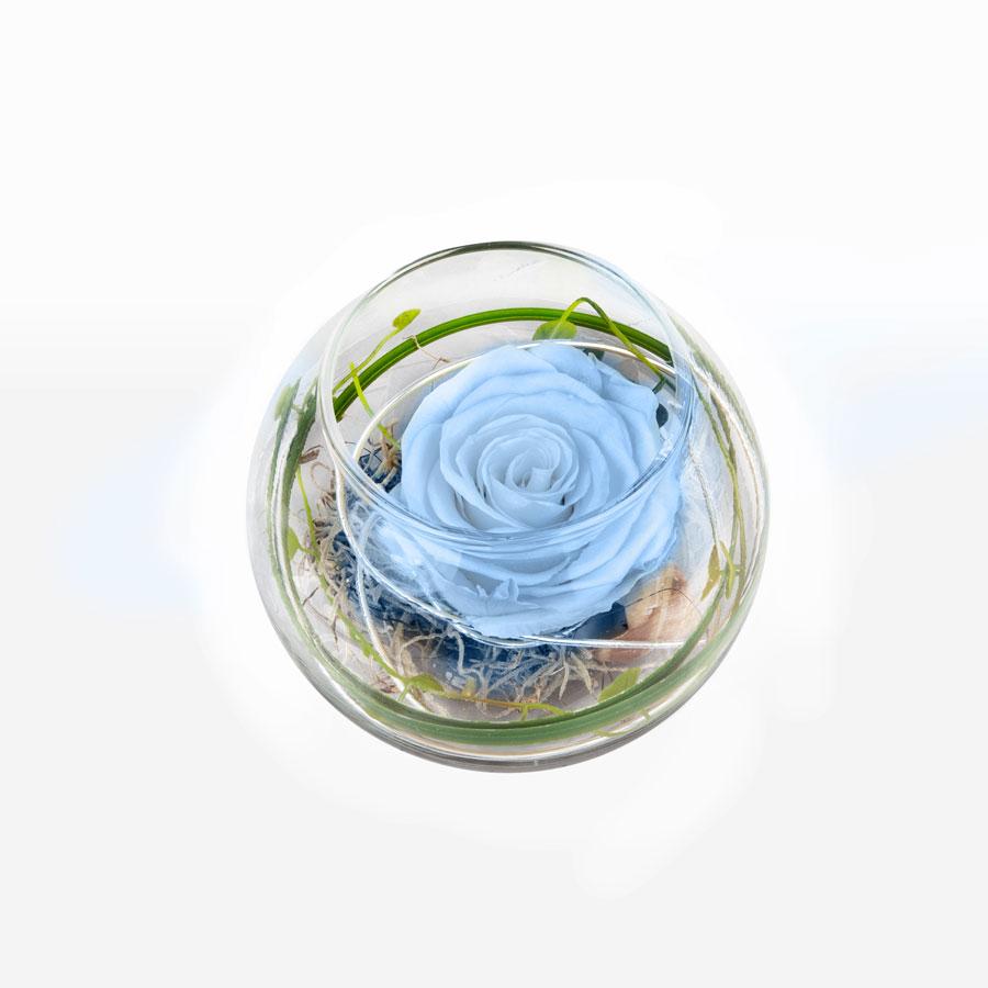 1 blaue Infinity Rose im Glas