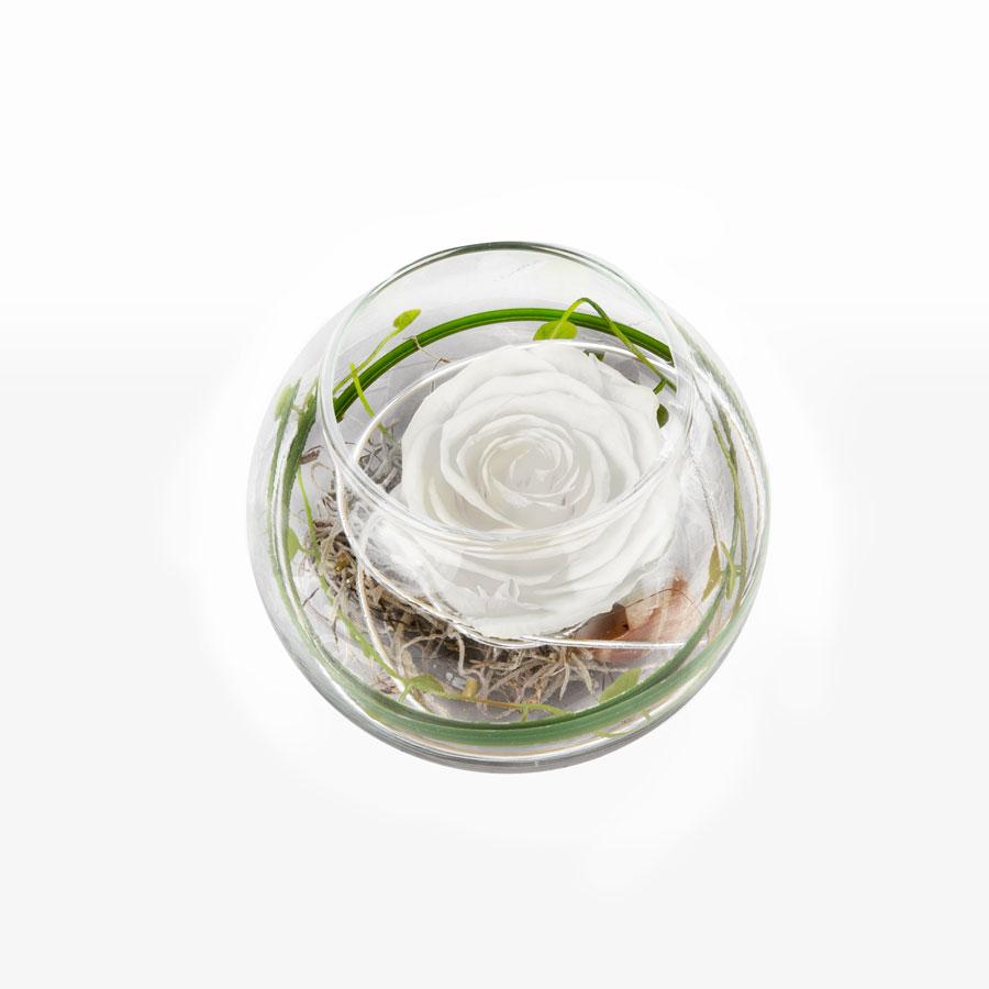 1 weiße Infinity Rose im Glas