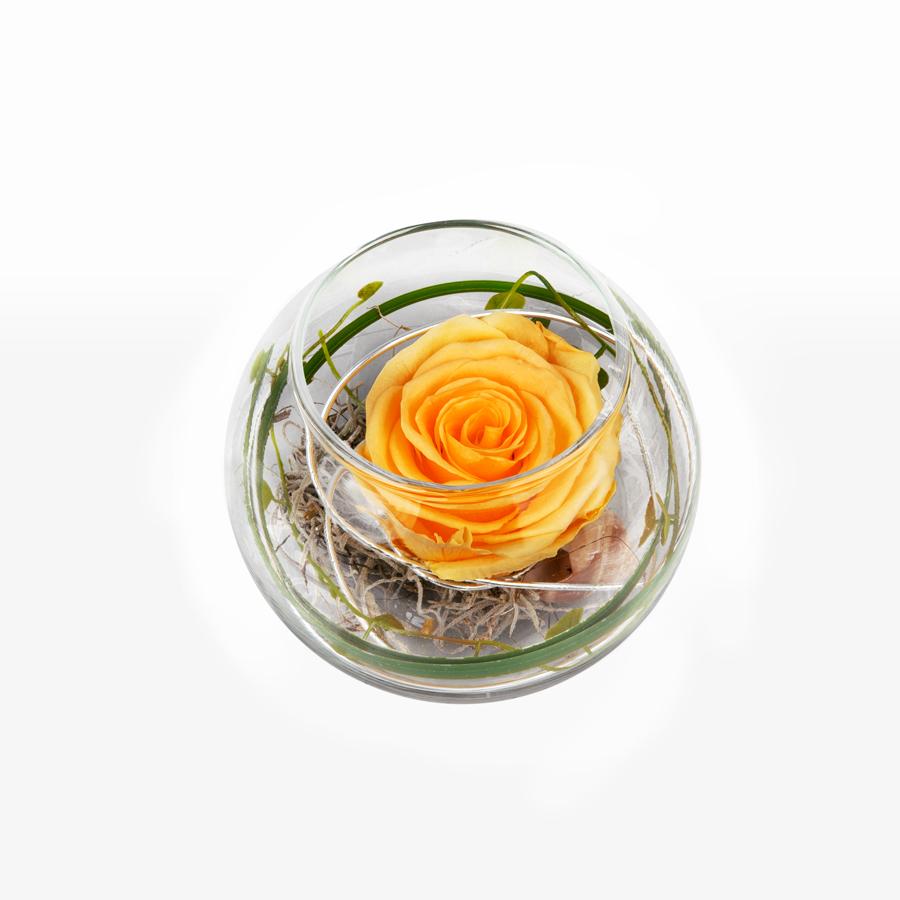 1 gelbe Infinity Rose im Glas