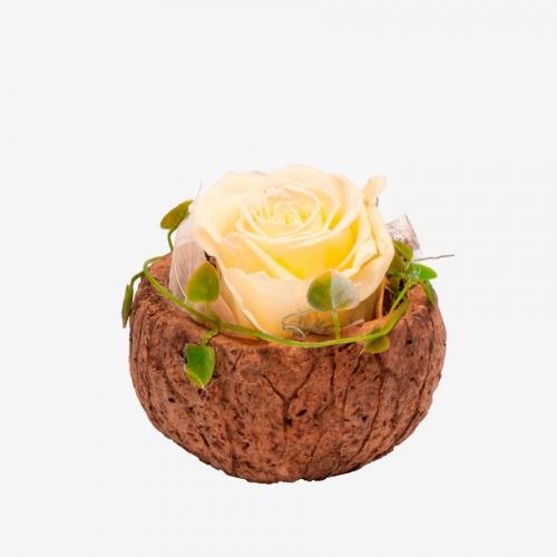 1 zartgelbe Infinity Rose in Orico Schote