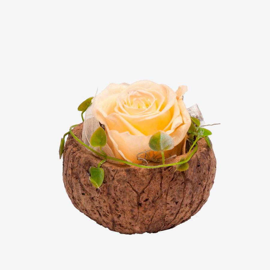 1 gelbe Infinity Rose in Orico Schote