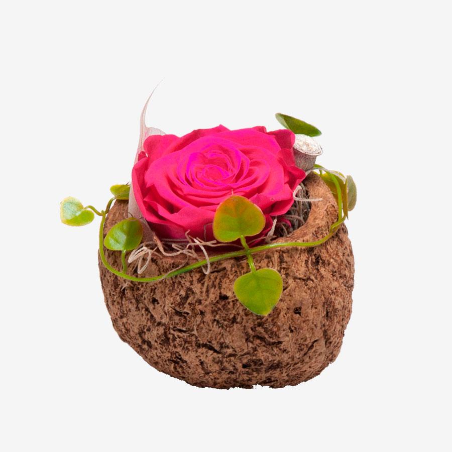 1 pinke Infinity Rose in Orico Schote