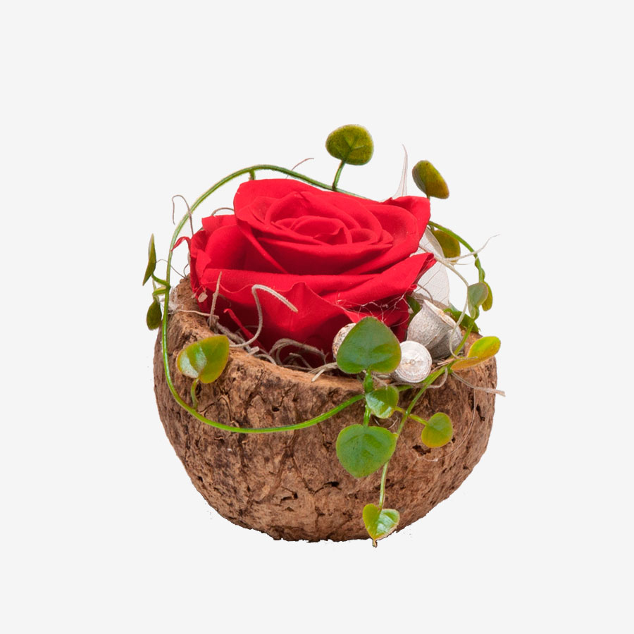 1 rote Infinity Rose in Orico Schote