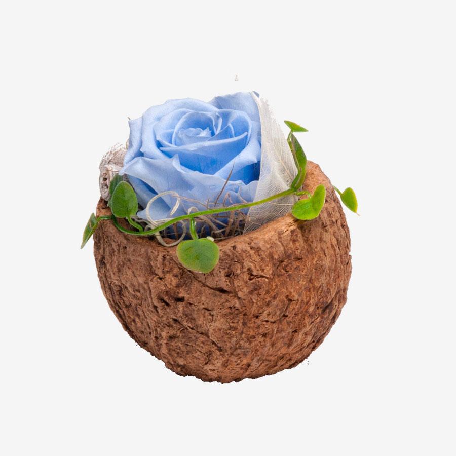 1 blaue Infinity Rose in Orico Schote