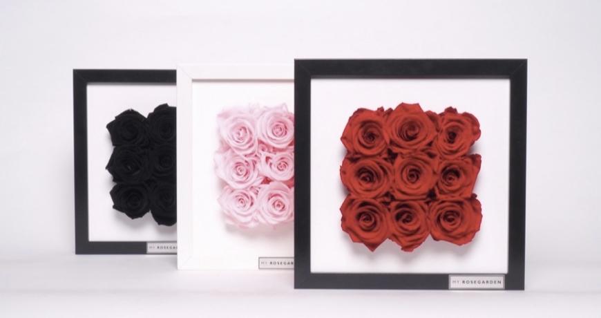 Rosenbild von My Rosegarden