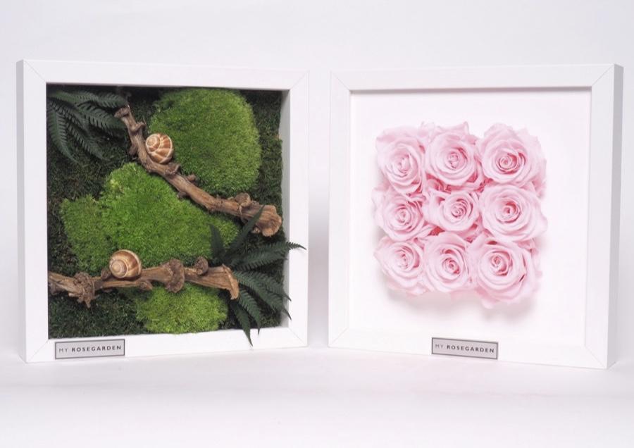 Neu! Die Infinity-Rosenbilder gibt's ab sofort im My Rosegarden Onlineshop